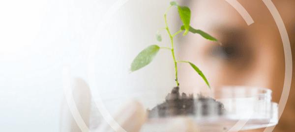 Planta en laboratorio
