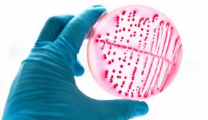 mikrobiomik