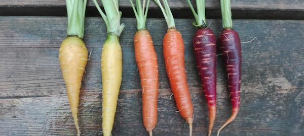 mini zanahorias cultivadas por Belatxiki.